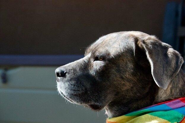 علائم مسمومیت سگ ها که باید به آنها توجه کنید