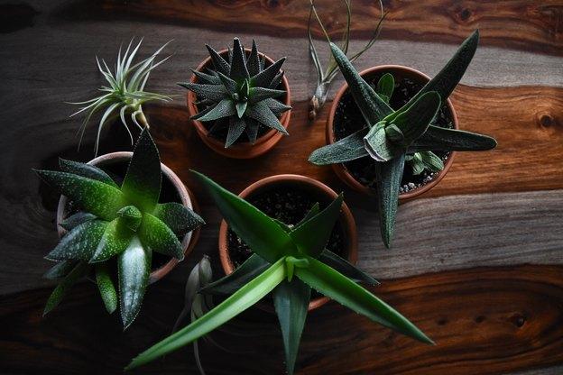 با گیاهان آپارتمانی در اسباب کشی چه کنیم