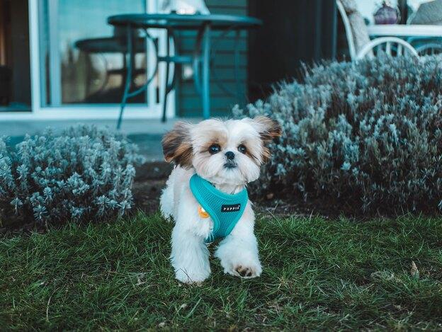 رشد و نگهداری توله سگ از ۳ ماهگی تا ۶ ماهگی