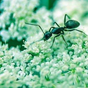 مورچه های بالدار در زمستان
