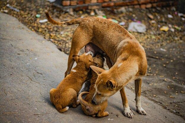 مراقبت از حیوانات خانگی در گرما