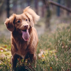 سگ با پارس کردن چه می گوید؟