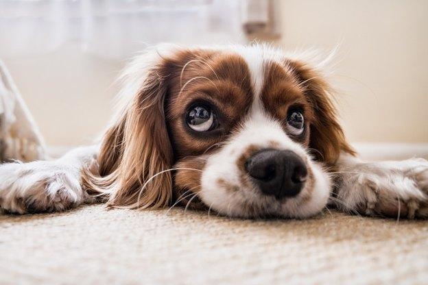 روغن نارگیل برای پوست سگ