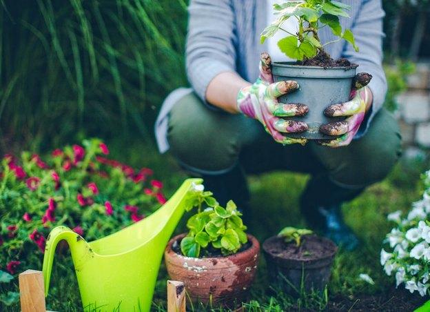 آب گازدار خشک برای رشد سریع گیاه