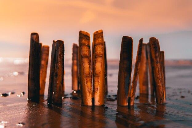چقدر کفپوش چوبی سفارش دهیم؟