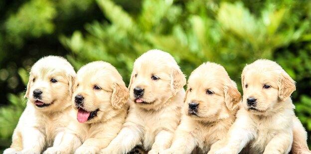 ۵ دستور ضروری که می توانید به سگتان آموزش دهید