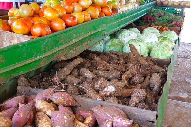 بهترین سبزیجاتی که می توانید در باغچه خانه خود بکارید