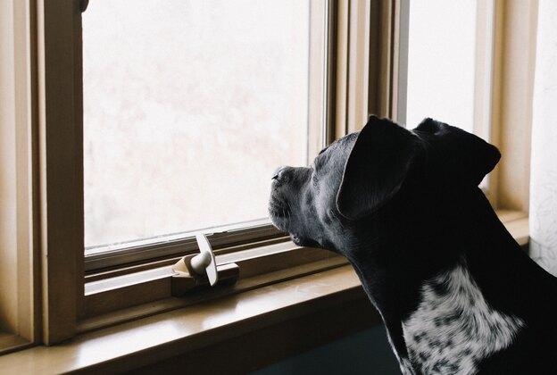 بهترین نژاد سگ برای تنها ماندن در خانه