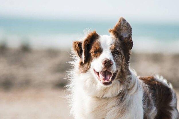 راهنمای واکسیناسیون سگ ها