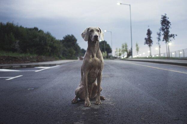 علت پارس کردن سگ در شب چیست؟