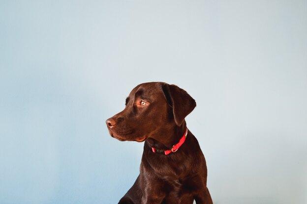فهمیدن صدای سگ و رفتارهای اجتماعی او
