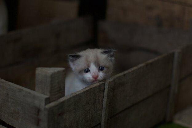 برنامه واکسیناسیون بچه گربه