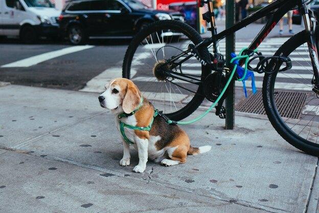چگونه به سگ مان آموزش دهیم سر جایش منتظر بماند