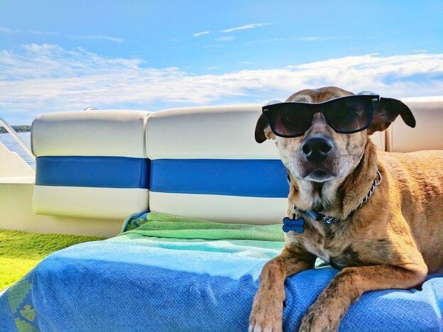 نگهداری از سگ در گرمای تابستان