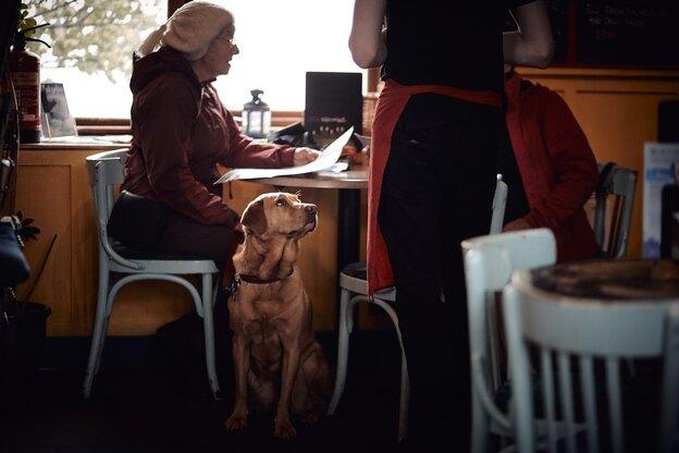 چقدر شکلات برای سگ ها سمی است؟