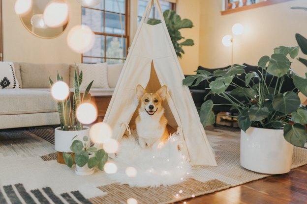 خانه های کوچک و صدای سگ؛صدای پارس سگ