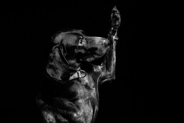 بهترین نژاد سگ را چطور انتخاب کنیم؟