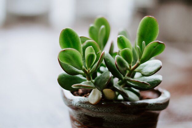 حرفه ای شیم: راهنمای کامل نگهداری از گیاه یشم