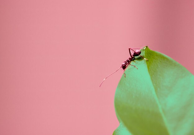 سمپاشی مورچه: یک اسپری ساده و موثر