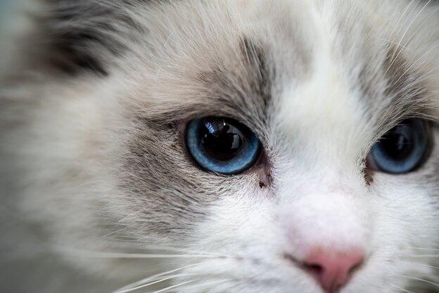 راهنمای درمان کک گربه