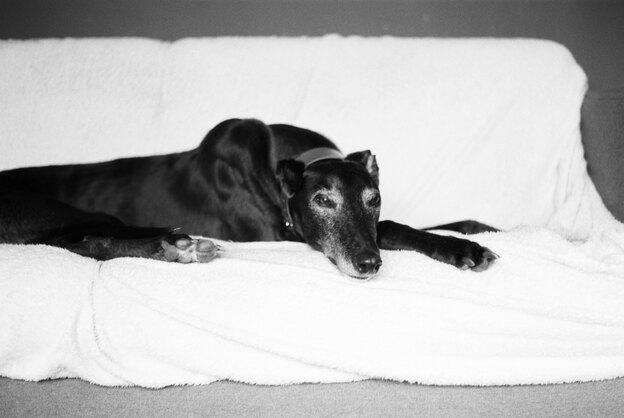 ۸ راه برای مراقبت از سگ ها در فصل تابستان