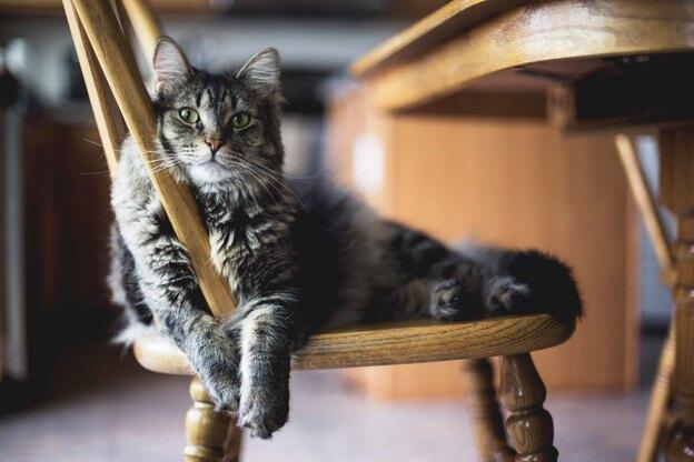 برای از بین بردن حشره کک گربه چکار کنیم؟
