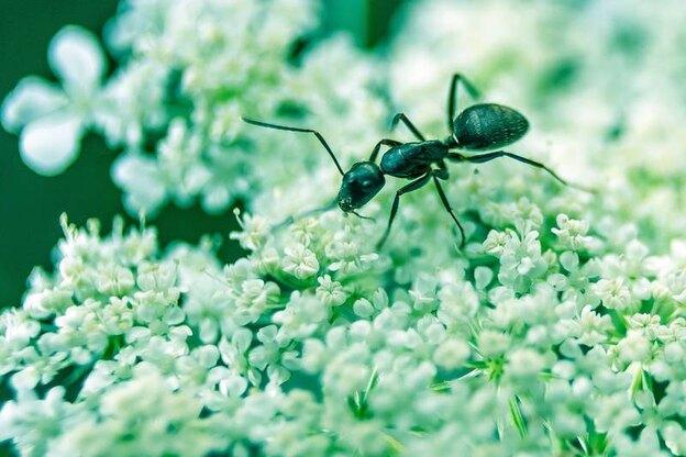 راه های رهایی از شر مورچه ها