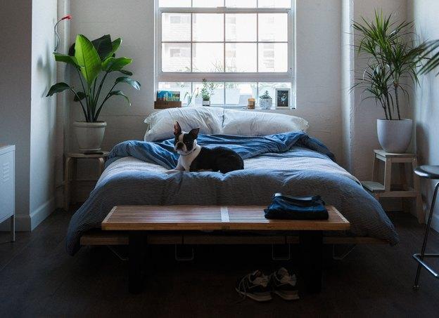 10 گیاه آپارتمانی مناسب برای اتاق خواب