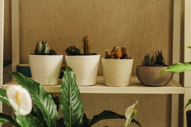 روش های خانگی تقویت گیاهان آپارتمانی