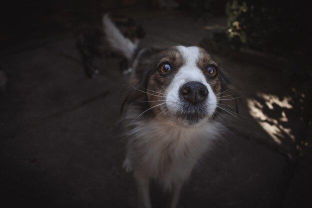 ۷ مهارت اصلی برای تربیت سگ