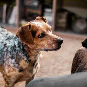 کم هزینه ترین سگ