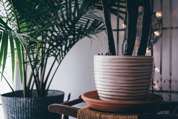 گیاهانی که در تاریکی رشد میکنند