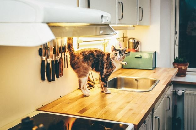 سینک استیل ظرفشویی را چه طور تمیزکنیم؟