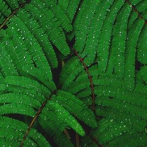 نگهداری گل و گیاه: تمیزکردن برگ ها