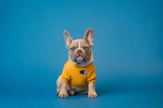 معرفی ۱۸ نژاد سگ برای بچه ها