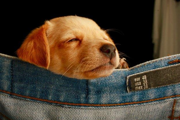 بهترین نژاد سگ برای کودکان و خانواده ها