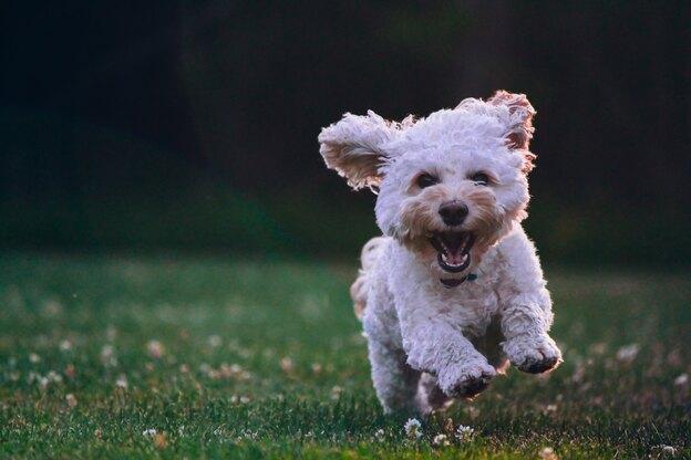 تربیت توله سگ: دستشویی بیرون خانه