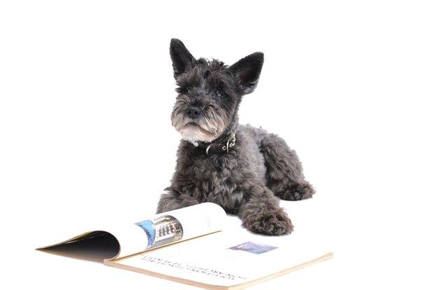 تربیت سگ: مبانی تعلیم فرمانبرداری