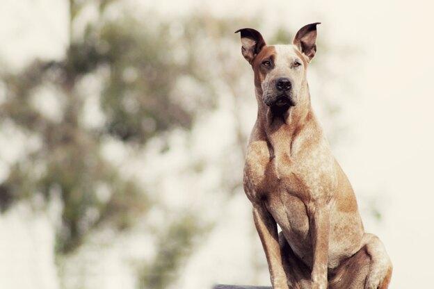 کلید اسرار: چگونه سگ سالمی داشته باشیم؟