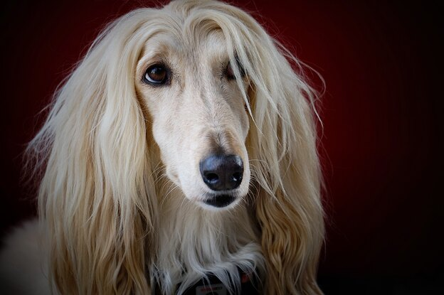 ۱۰ تا از دوستانه ترین نژادهای سگ ها