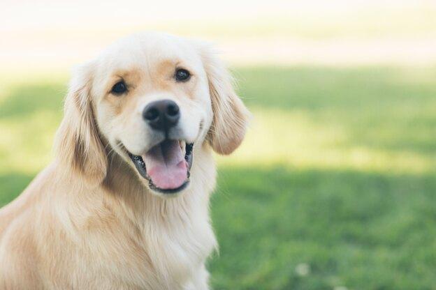 داستان سگ های نجات داده شده
