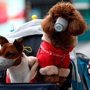 توصیه های سازمان بهداشت جهانی برای حمایت از حیوانات خانگی در مقابل ویروس کرونا