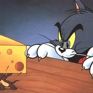 ۱۲ پرسش و پاسخ متداول درباره وجود موش در خانه