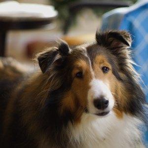 تهیه غذای خانگی برای سگ ها