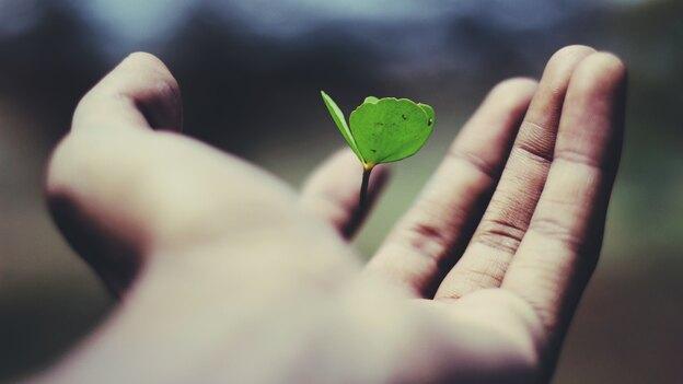 ترفند رشد سریع گیاهان آپارتمانی