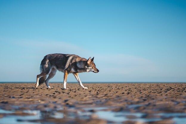 راهنمای نگهداری سگ گرگی