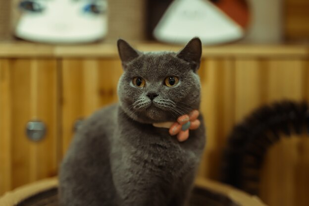 رفتار عجیب گربه ها