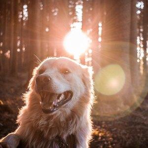 تربیت سگ: ۱۰ فرمان اصلی