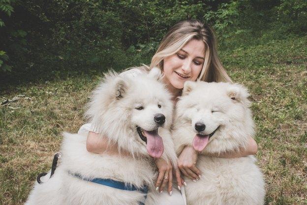 نگهداری از حیوانات خانگی: دو سگ بهتر از یک سگ