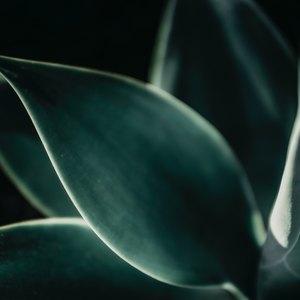 آیا آلوئه ورا در درمان پسوریازیس موثر است؟
